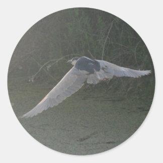 Black-Crowned Night-Heron Sticker