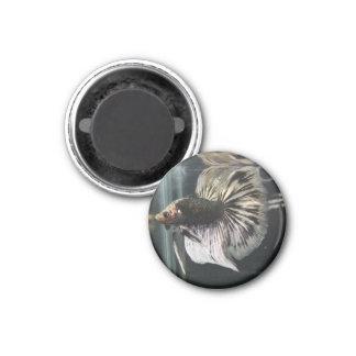 Black Dalmatian Magnet