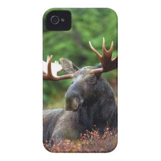 Black Deer Lying on Plants iPhone 4 Case