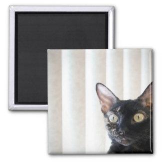 Black Devon Rex Cat Magnet