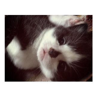 Black Diamond Nose CUTE Kitty Postcard