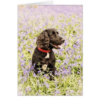 Black dog in bluebells card