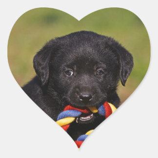 black dog labrador retriever puppy Sticker