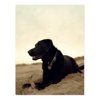 Black dog on sand with stick postcard