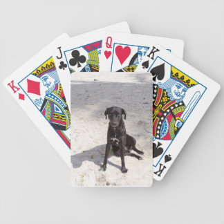 Black dog with an evil eye poker deck