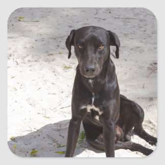 Black dog with an evil eye square sticker