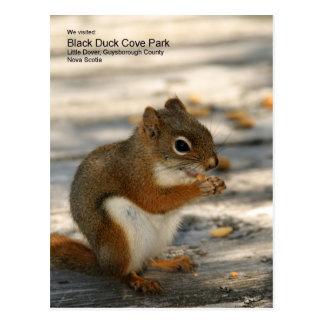 Black Duck Cove Park Postcard