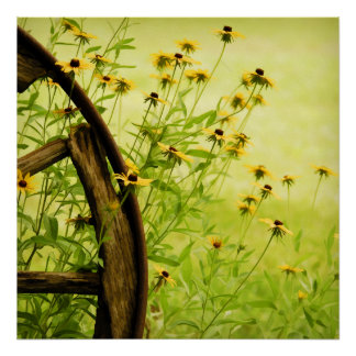 Black-Eyed Susan and Wagon Wheel Photo Poster