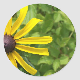 Black-eyed Susan Classic Round Sticker