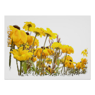 Black Eyed Susan Flower Art Print