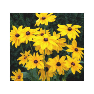 Black Eyed Susan Flowers Canvas Print