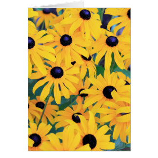 Black Eyed Susan Flowers in Deep Yellow Card
