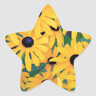 Black Eyed Susan Flowers in Deep Yellow Star Sticker