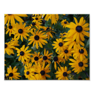 Black-eyed Susan Flowers Poster