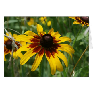 Black-eyed Susan Note Card