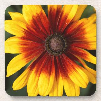 Black-eyed-Susan (Rudbeckia hirta) Coaster