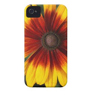 Black-eyed-Susan (Rudbeckia hirta) iPhone 4 Case