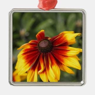 Black-eyed-Susan (Rudbeckia hirta) Silver-Colored Square Ornament