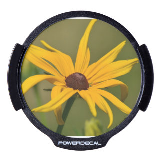 Black Eyed Susan Solitude LED Window Decal