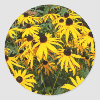 Black Eyed Susan ~ sticker