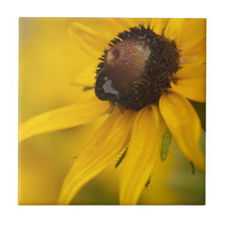 Black-Eyed Susan with a Teardrop Tile