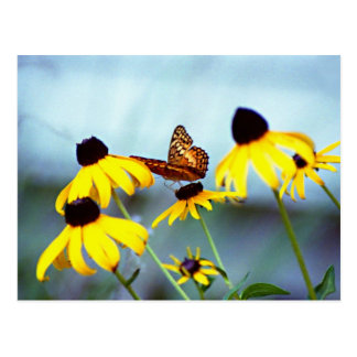 black-eyed susan with butterfly 1 postcard