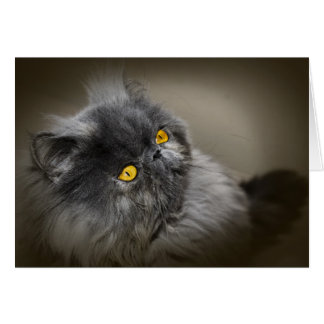 Black Fluffy Cat with Orange Eyes Blank Greeting Card