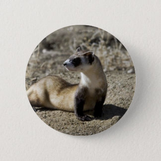 Black-Footed Ferret (captive) 2 Inch Round Button