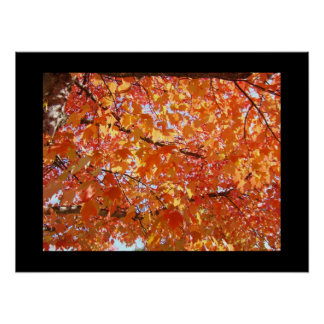 Black Frame Orange Colorful Fall Art Leaves Posters
