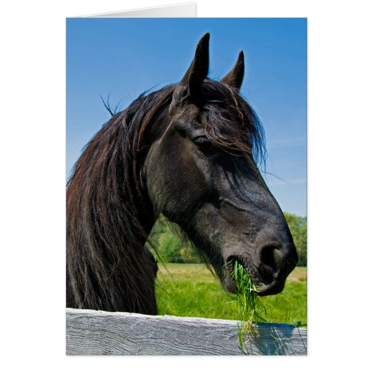 black Friesian horse birthday Card