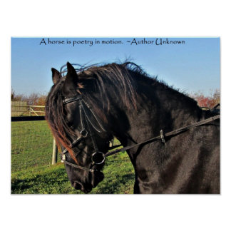 Black Friesian Horse famous horse quote poster
