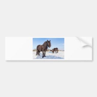 Black frisian horses in winter snow bumper sticker