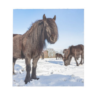 Black frisian horses in winter snow notepad