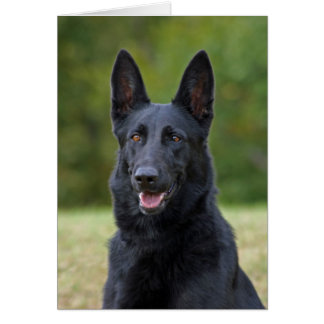 Black German Shepherd Card