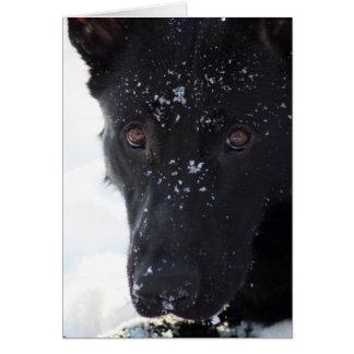 Black German Shepherd Card