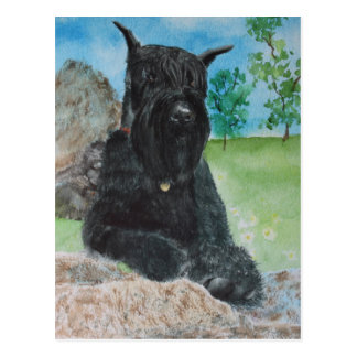 Black Giant Schnauzer Postcard
