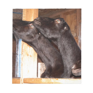 Black goats looking with purpose notepad