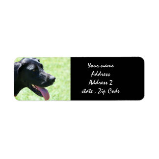 Black Great Dane Address Labels