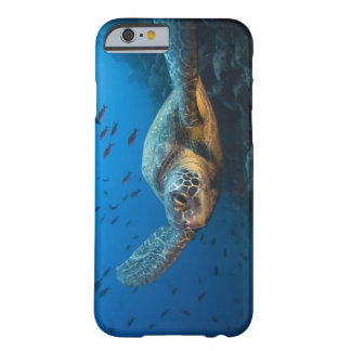 Black (Green) Turtle (Chelonia agassizi) off Barely There iPhone 6 Case