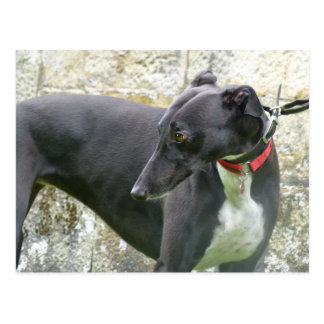 Black greyhound (a36) postcard