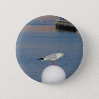 Black-headed gull perched on post calling 2 inch round button