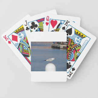Black-headed gull perched on post calling bicycle playing cards