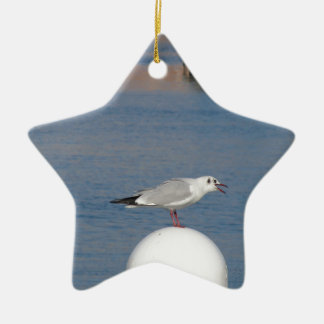 Black-headed gull perched on post calling ceramic star ornament