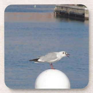 Black-headed gull perched on post calling coaster