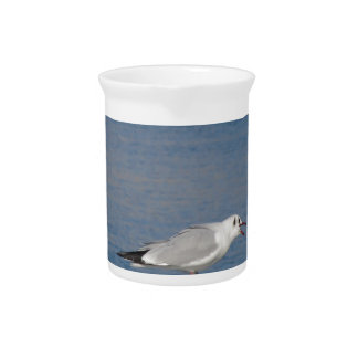 Black-headed gull perched on post calling drink pitchers
