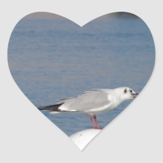 Black-headed gull perched on post calling heart sticker