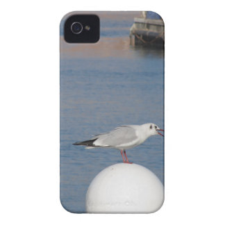 Black-headed gull perched on post calling iPhone 4 Case-Mate cases