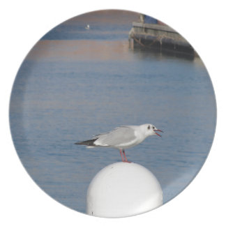 Black-headed gull perched on post calling plates