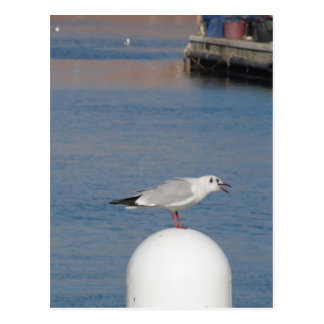Black-headed gull perched on post calling postcard