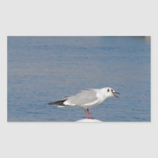 Black-headed gull perched on post calling sticker